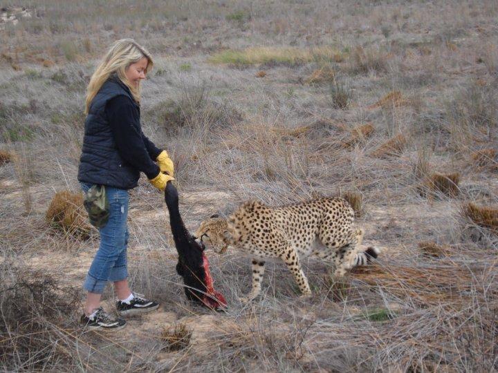 Cheetah Volunteer Africa
